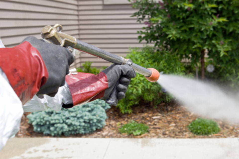 Does diesel kill weeds - how to use diesel to kill weeds