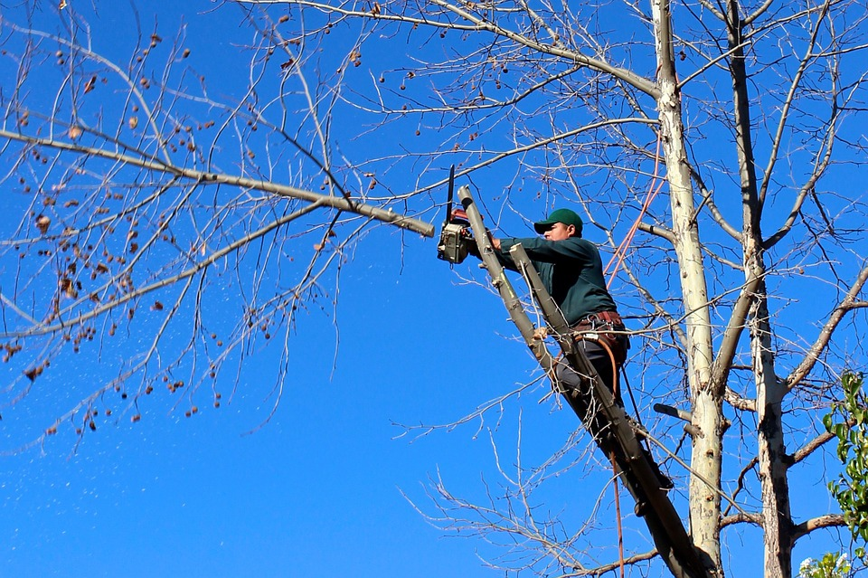 What is tree trimming and why is it necessary