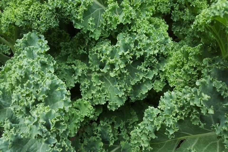 How to Get Rid Of Caterpillars on Kale