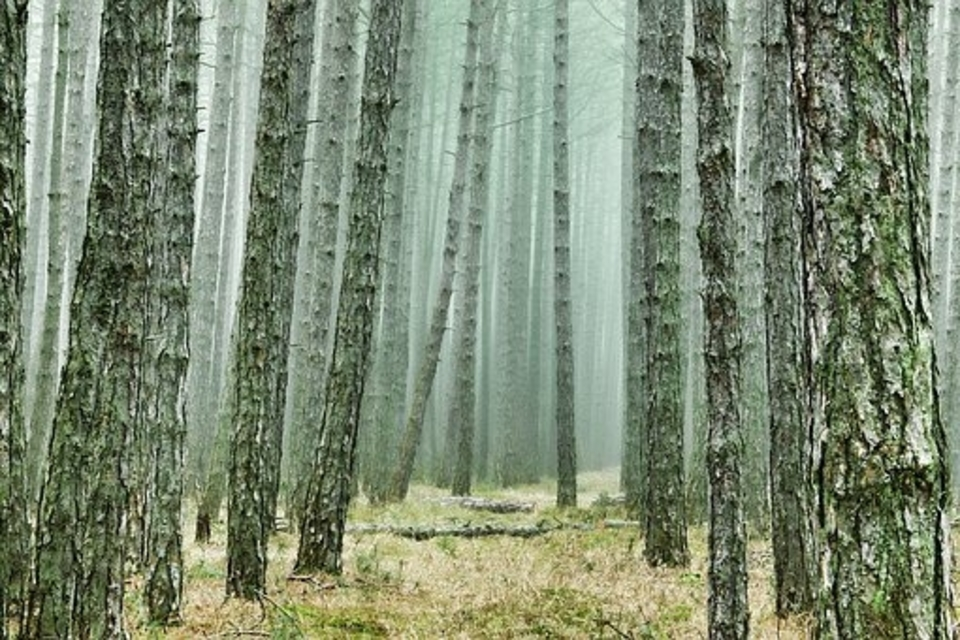 what vegetables grow well under pine trees
