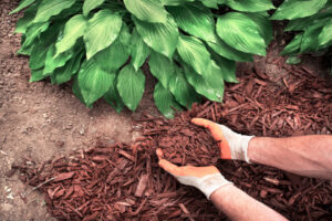 wood chips in soil - good or bad