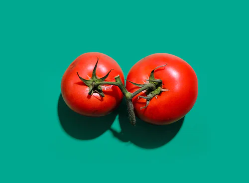 Can you Plant two tomato plants together in a Pot