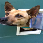 The Best Insulated Doggie Doors for Cold Regions