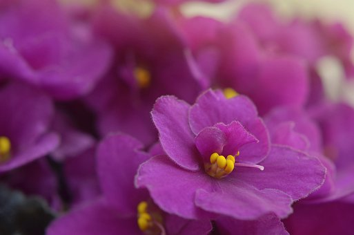 best self-watering pots for african violets